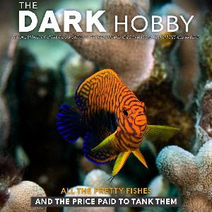 the-dark-hobby_square